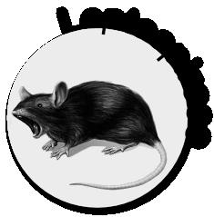 Cruzadinha - Leptospirose